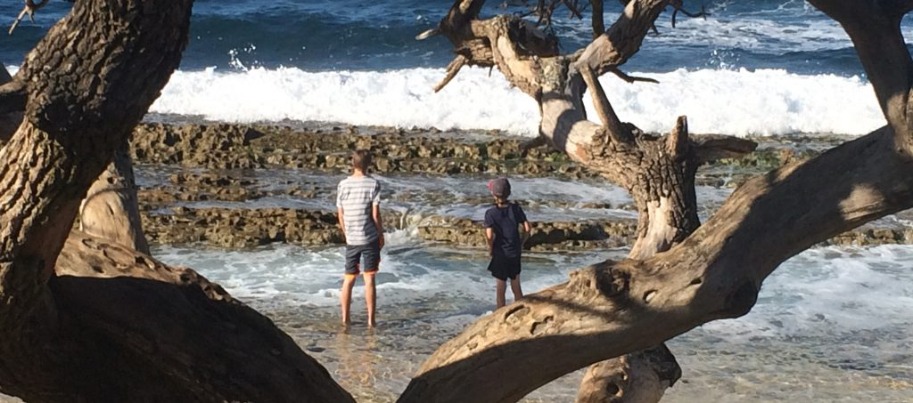 boys at beach through tree branches