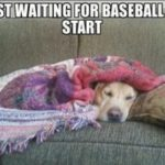 waiting for baseball season to start dog