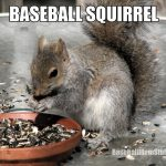 baseball squirrel