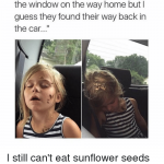 sunflower seeds fail
